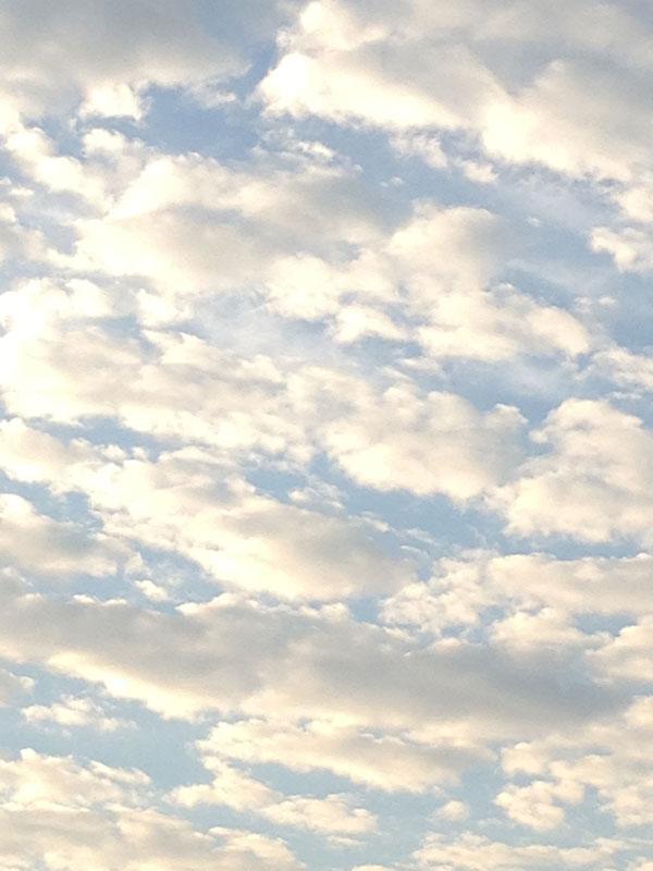 もくもく雲に柿。_a0129631_9142370.jpg