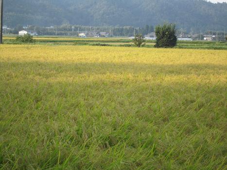 ターボ兄ちゃんと琵琶湖_b0177436_111865.jpg