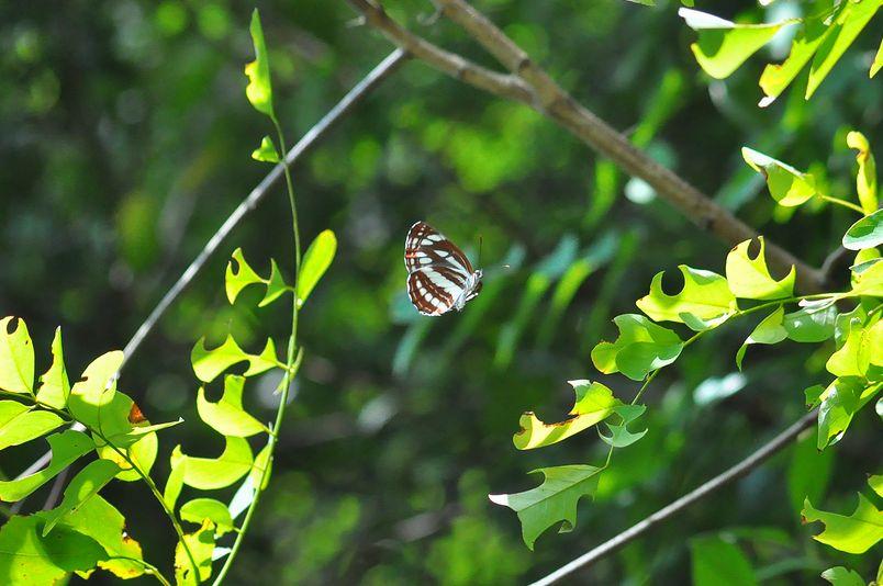 9月22日~23日(晴れ時々くもり)タイトル:ミドリヒョウモンの生態_f0105542_1751196.jpg