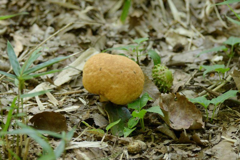 林に落ちてるもの_b0036743_2157362.jpg