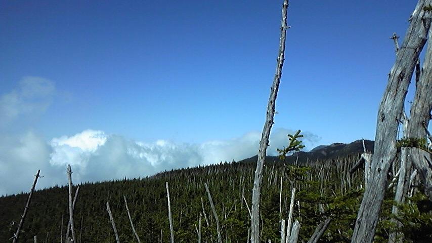 八ヶ岳_c0049455_1016668.jpg