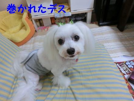 b0193480_13365232.jpg