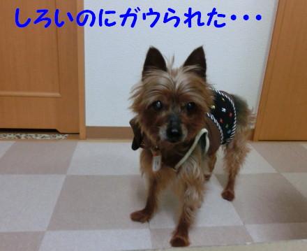 b0193480_13395218.jpg