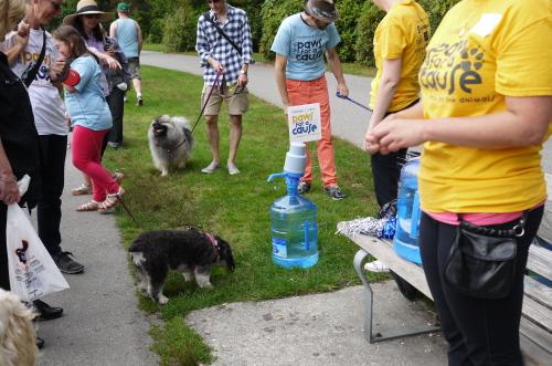 愛犬と参加するイベント2013 Paws for a Cause_d0129786_841527.jpg