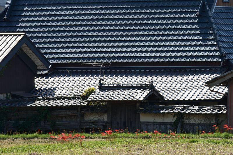 穴太寺周辺の曼珠沙華2013 其の二_f0032011_19373677.jpg