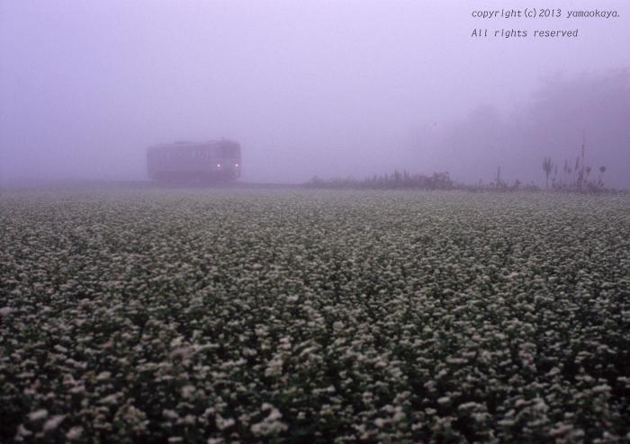朝霧の蕎麦花畑_d0309612_1944079.jpg