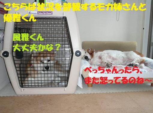 f0121712_16503235.jpg