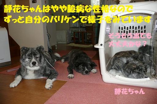 f0121712_16504988.jpg