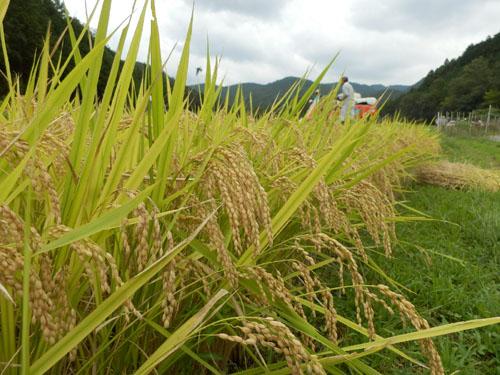 菜園のヒガン花_e0048413_16573511.jpg
