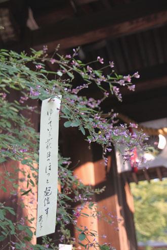 梨の木神社 萩まつり_e0048413_6584375.jpg