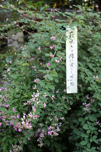 梨の木神社 萩まつり_e0048413_6585534.jpg