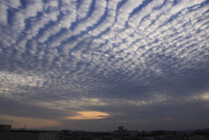 さば雲(巻積雲)_b0268615_10194588.jpg