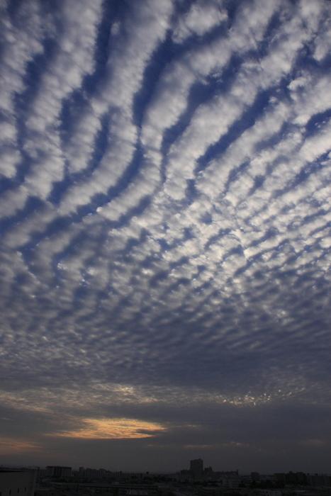 さば雲(巻積雲)_b0268615_1020158.jpg
