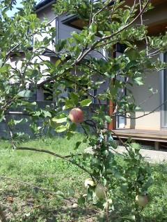 奇跡のリンゴ_a0142317_16304149.jpg
