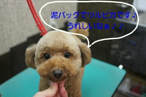 b0130018_1559437.jpg