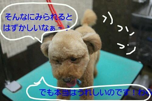 b0130018_15595986.jpg