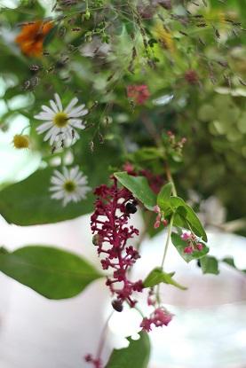 ikanika 9月の花の会・・・♪_f0168730_19584792.jpg