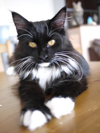 猫のお友だち ワサビちゃん天ちゃんう京くん編。_a0143140_0201833.jpg
