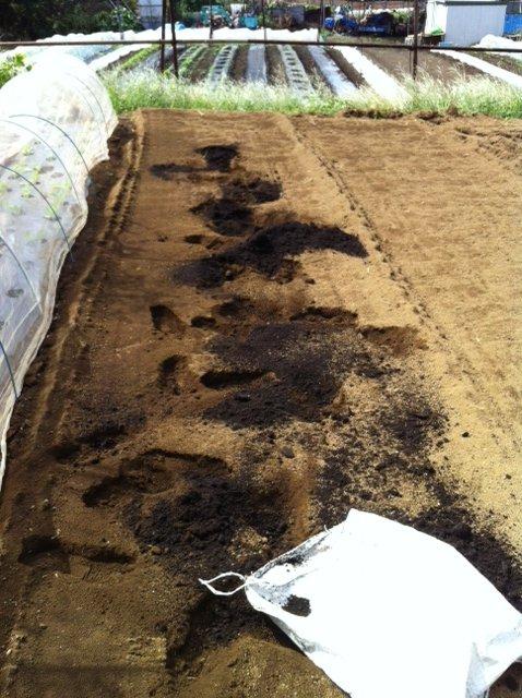 土を移動して水平に・・・トラクターでは限界があるんです_c0222448_14132194.jpg