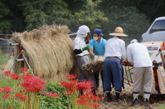 稲刈りの季節_a0257652_21412849.jpg