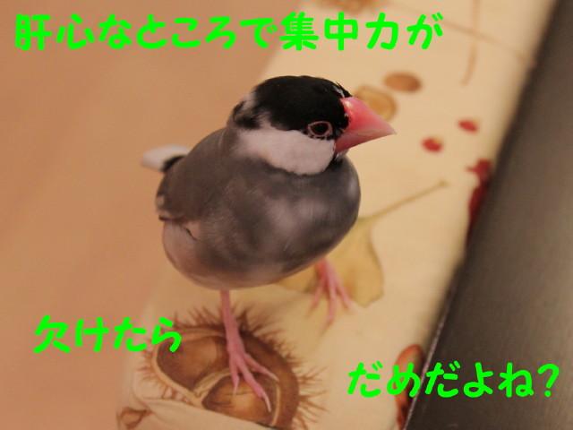 b0158061_2174212.jpg