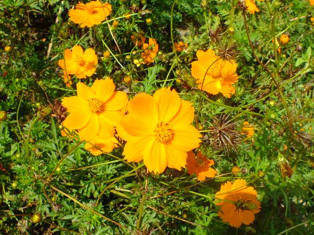 9月22日 くりはま花の国 その1_e0145782_1813779.jpg