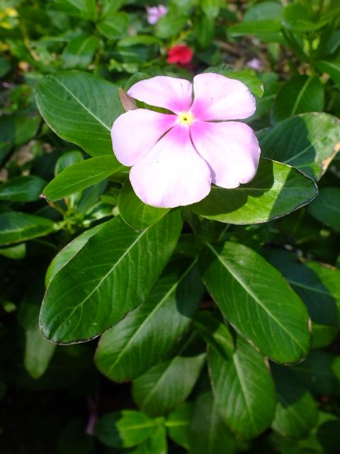 9月22日 くりはま花の国 その1_e0145782_18141269.jpg
