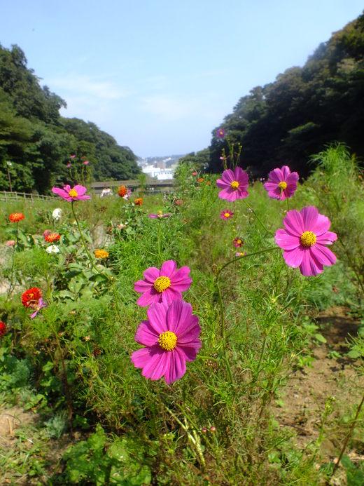 9月22日 くりはま花の国 その1_e0145782_185356.jpg