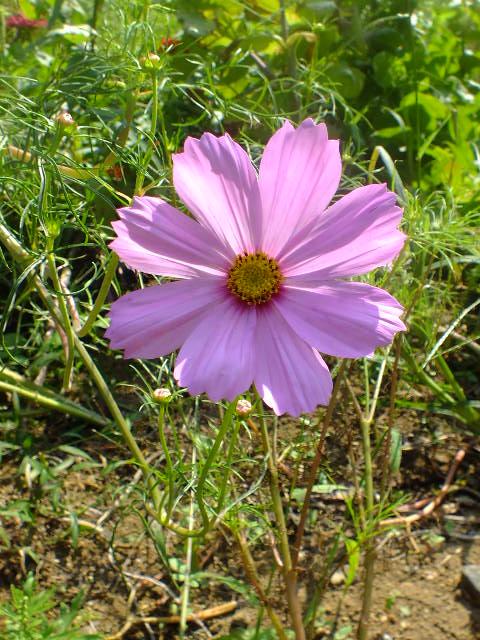 9月22日 くりはま花の国 その1_e0145782_1861740.jpg