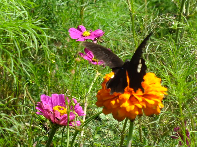 9月22日 くりはま花の国 その1_e0145782_1865666.jpg