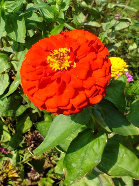 9月22日 くりはま花の国 その1_e0145782_1871148.jpg