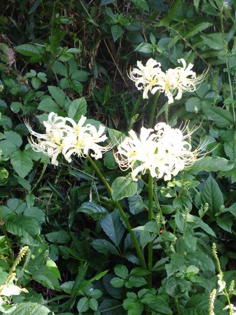 9月22日 くりはま花の国 その1_e0145782_1894738.jpg