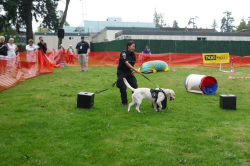 愛犬と参加するイベント2013 Paws for a Cause_d0129786_1352261.jpg