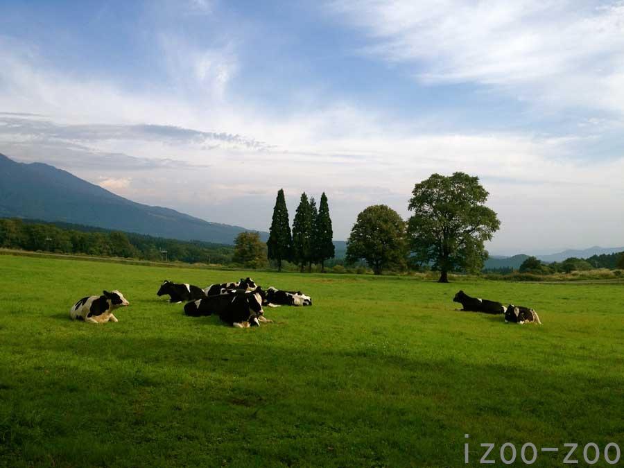 牛さん、まったり〜_c0223095_1531458.jpg