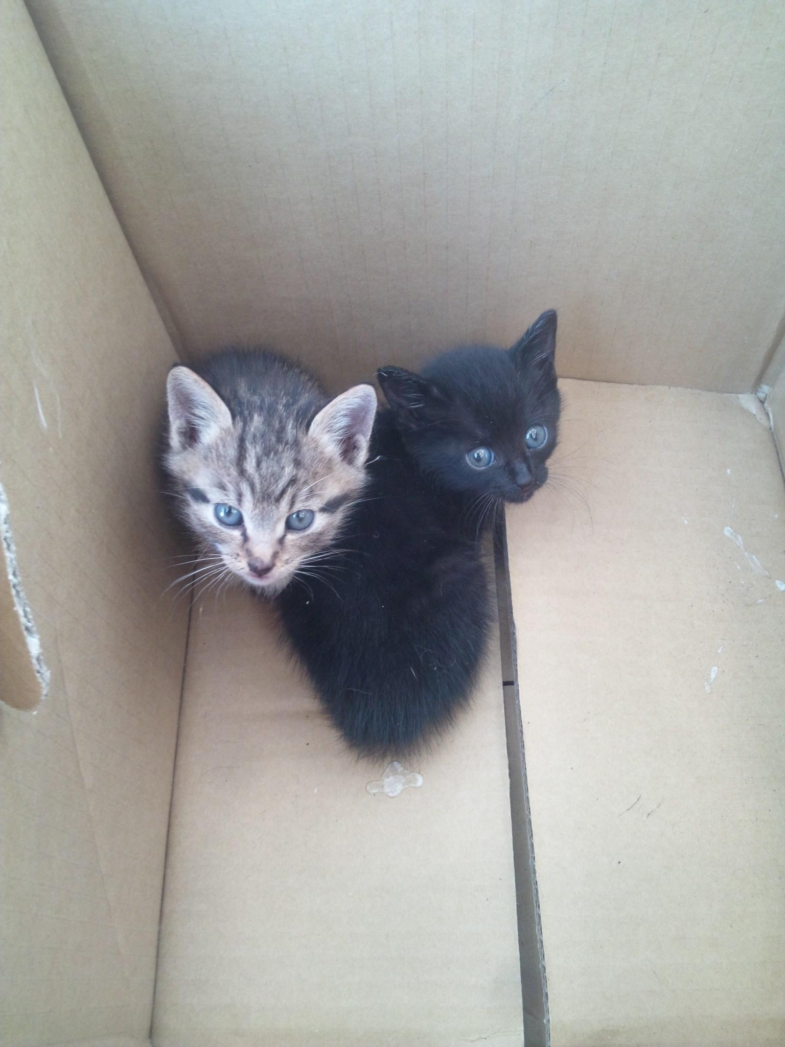 猫を_e0186499_2011520.jpg