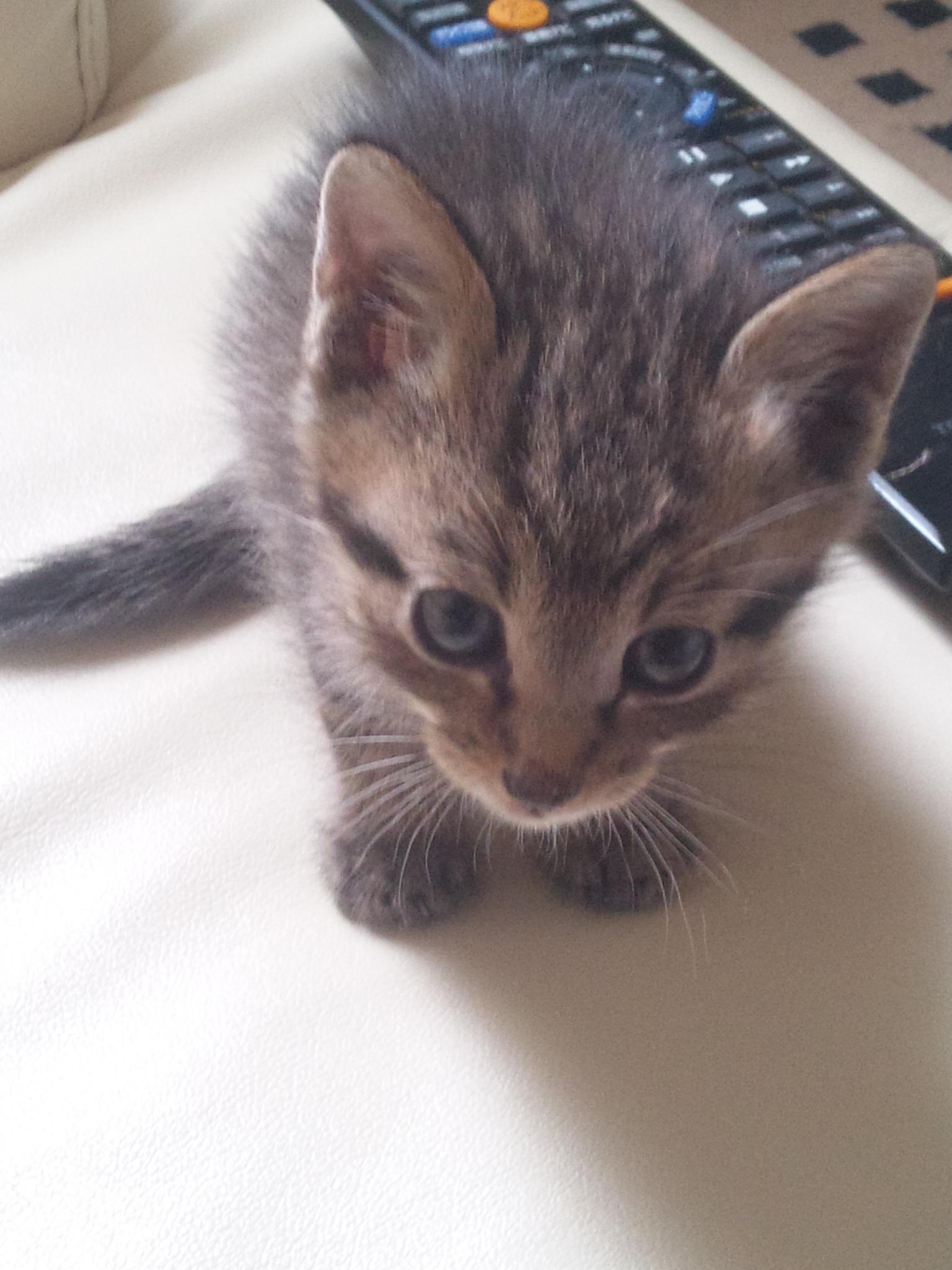 猫を_e0186499_2011551.jpg
