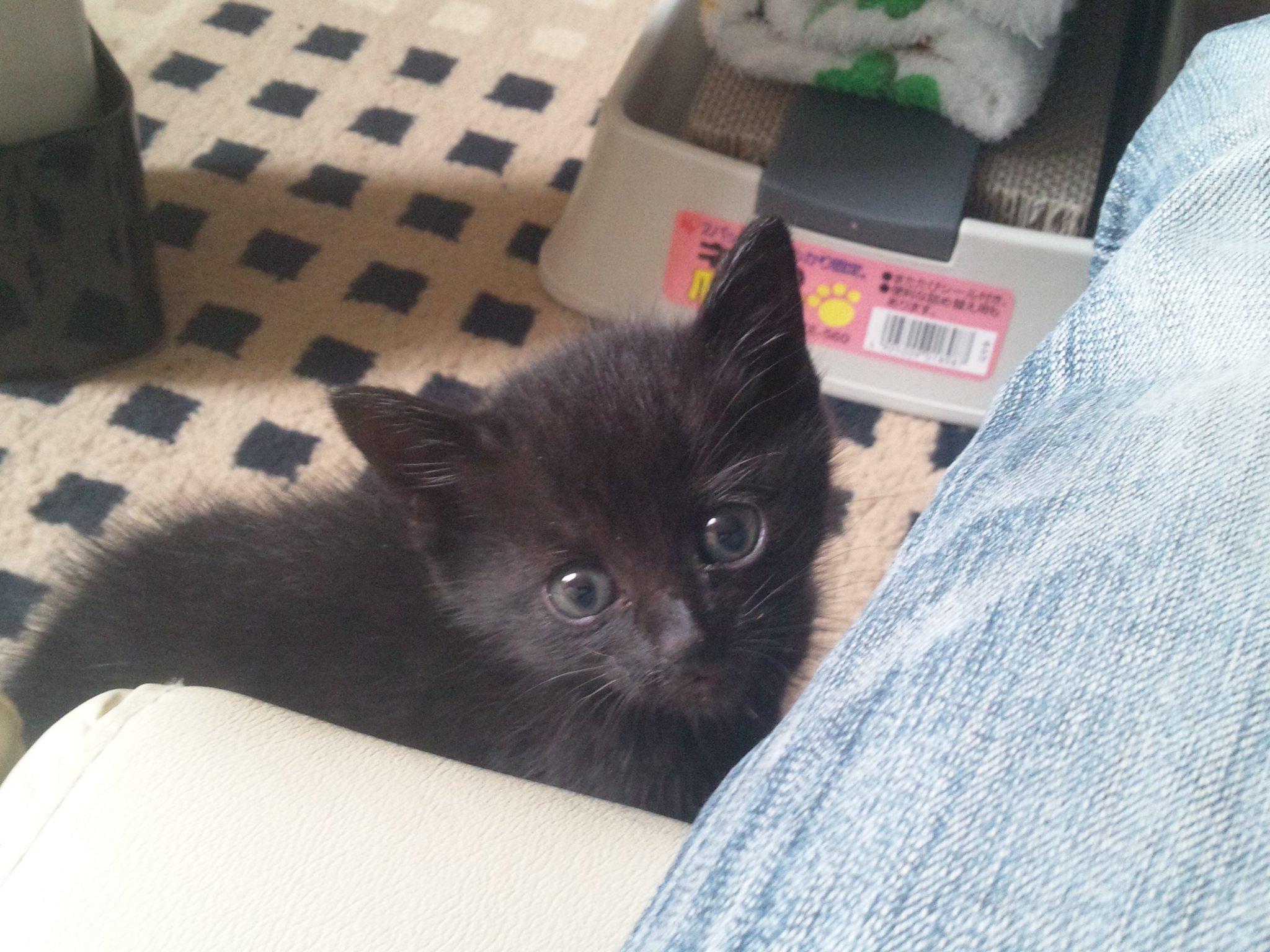 猫を_e0186499_2011581.jpg