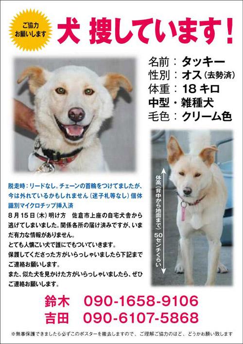 迷子捜索(8/15佐倉市タッキー)_f0242002_19392192.jpg