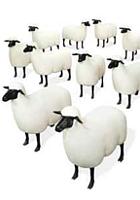 都心のガソリン・スタンド跡地が羊の遊ぶ芝生広場に?!_b0007805_2133570.jpg