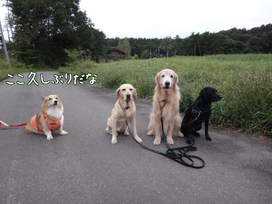 やっと朝散歩出来たね_f0064906_1610539.jpg