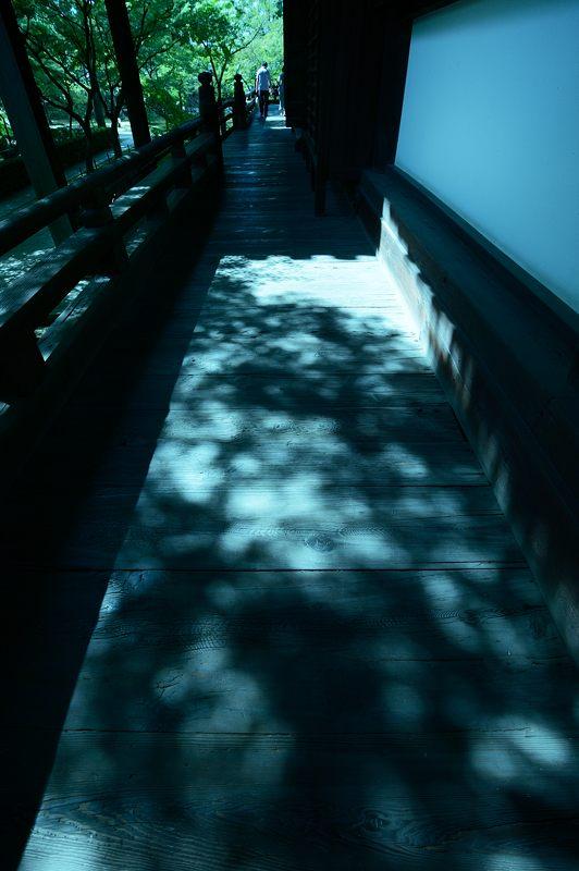 晩夏の真如堂 其の二_f0032011_19222551.jpg