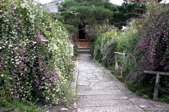 萩の寺 常林寺_e0048413_2123472.jpg