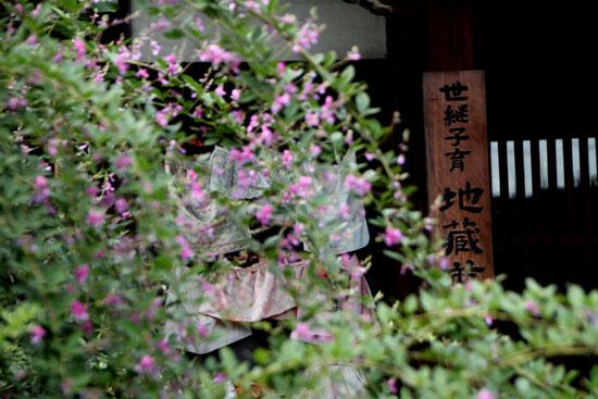 萩の寺 常林寺_e0048413_2124827.jpg