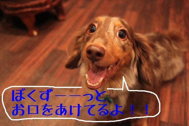 b0130018_1726184.jpg