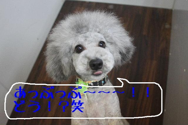 b0130018_1741421.jpg