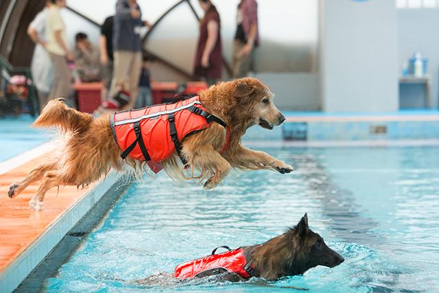 跳ぶ泳ぐ_e0192921_2041476.jpg
