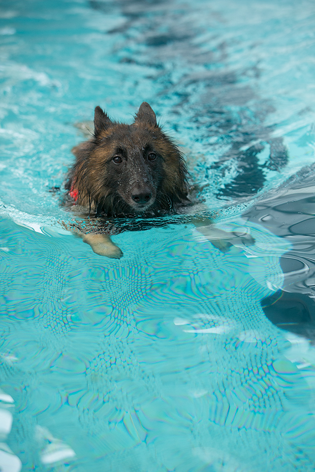 跳ぶ泳ぐ_e0192921_20415059.jpg
