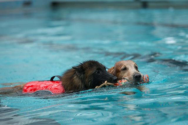 跳ぶ泳ぐ_e0192921_204151100.jpg