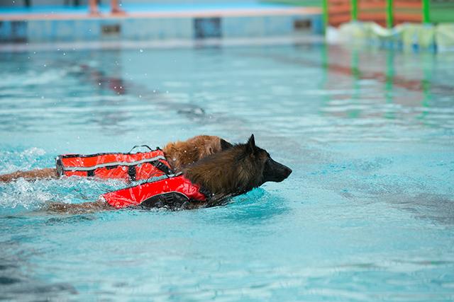 跳ぶ泳ぐ_e0192921_2041536.jpg