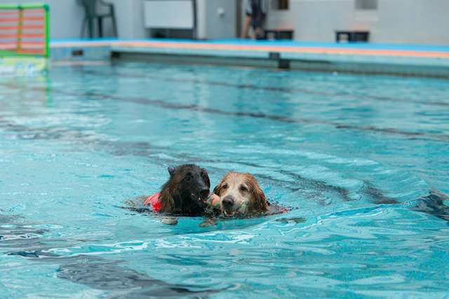 跳ぶ泳ぐ_e0192921_20415551.jpg